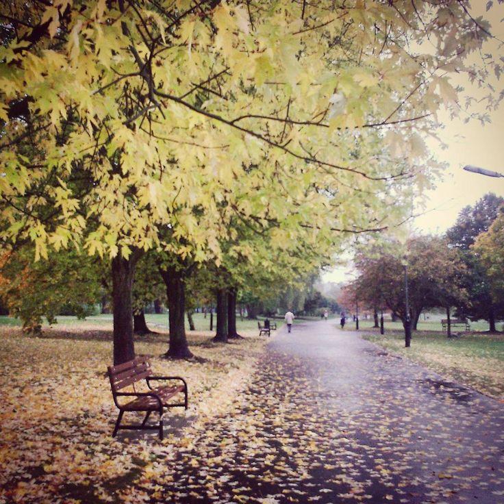 Zanim przyjdzie Pan Gospodarz i posprząta liście,  w parku jest tak przytulnie...     #park #city #citylife #running #jogging #fit #goodmorning #autumn #autumnleaves #leaves #jesień #jesienzjestrudo #rain #trees #fall #winteriscoming #lodz