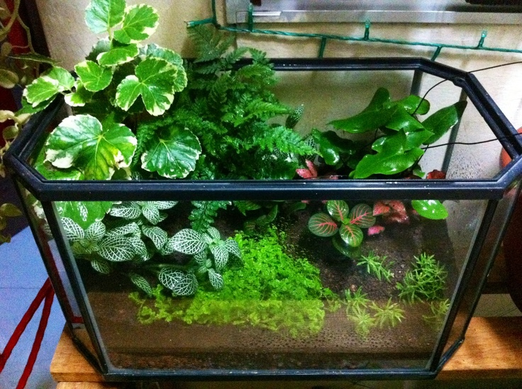 17 Best 1000 images about Planted Aquarium on Pinterest Aquascaping