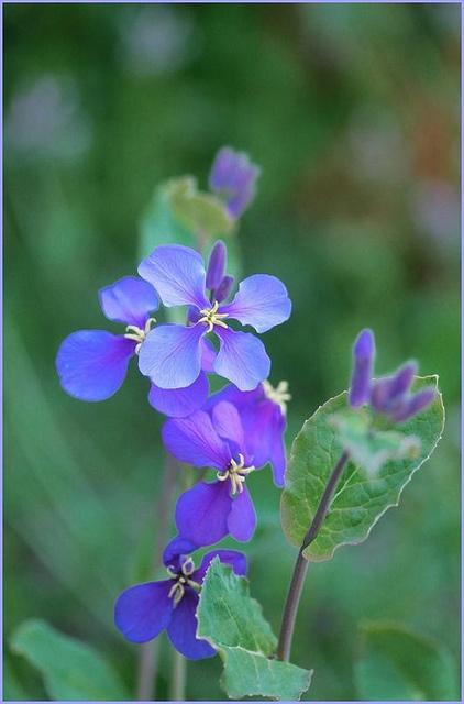 ~~Wildflower by T.takako~~