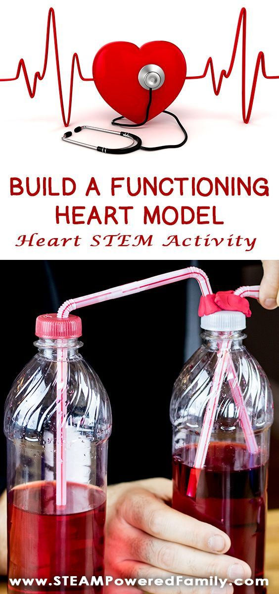 This Heart STEM activity to build a functioning heart model uses all 4 STEM pillars - Science, Technology, Engineering and Math. Kids will spend some time learning about their own heart rates, then how blood flows through the body. For the exciting conclusion engineer and build a functioning model of a beating heart. #HeartModel #HeartSTEM #STEMActivity #HeartScience #HeartMonth via @steampoweredfam
