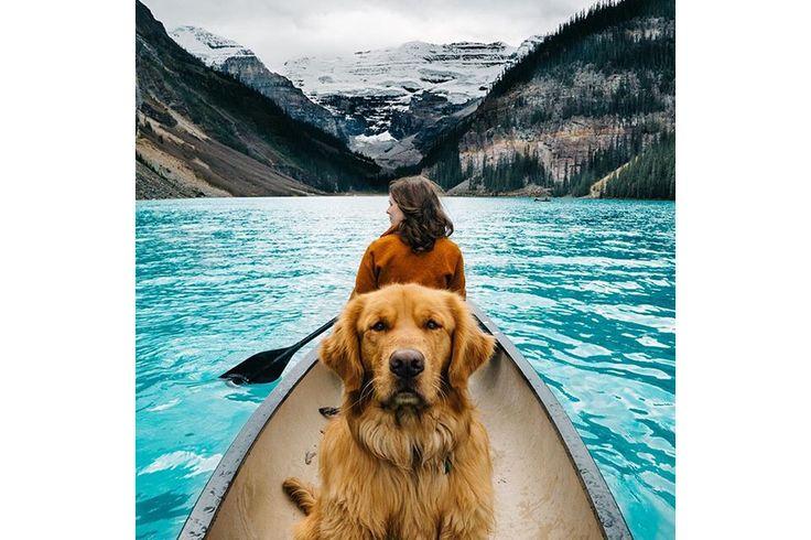 Aspen, o cão todo-o-terreno | P3