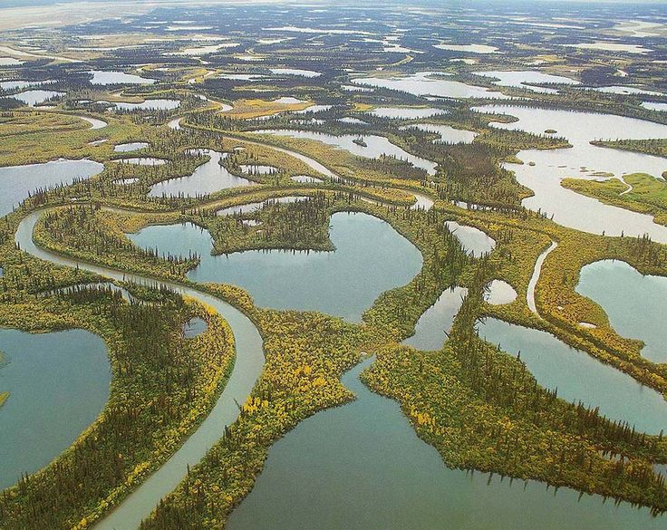 The amphibious landscape of Mackenzie River Delta in the Northwest Territories. - At 4,200 kilometres in length, the Mackenzie River in North-western Canada is one of the longest rivers in the world (11th). Its watershed, 1.8 million square kilometres in size, drains one-fifth of the country. The River, whose headwaters begin in the Peace and Athabasca rivers, flows north, across the Arctic Circle to the Beaufort Sea, a territory rich in oil and natural gas resources.