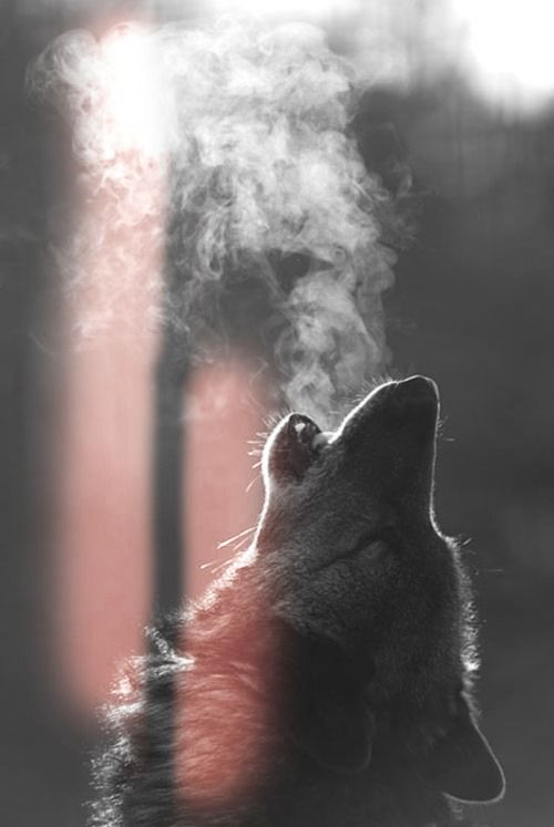 I can't HEAR the sound of his howl in my ears, but...I can FEEL it in my heart...dj