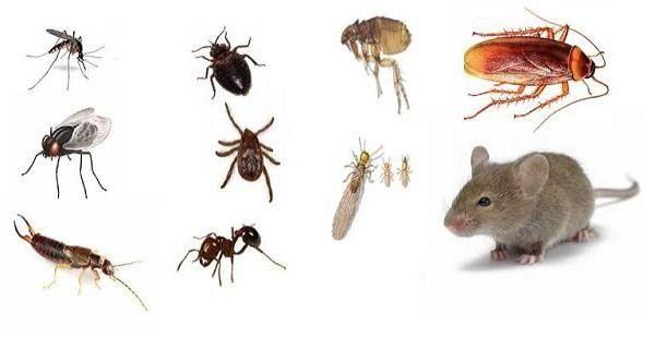 8 remedios simples que hacen que su hogar esté libre de insectos