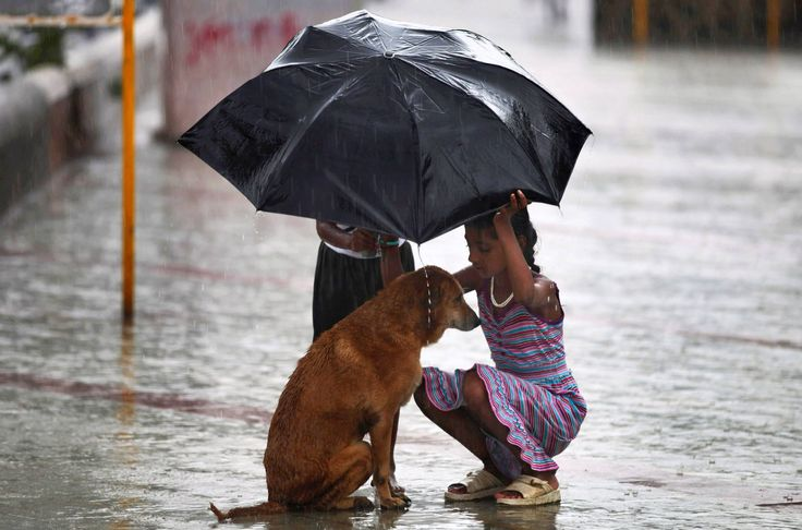 acts of kindness: Little Girls, Monsoon Rain, Girls Generation, Strayed Dogs, Dogs Lovers, Beautiful Pictures, Dogs Facts, Kid, Animal