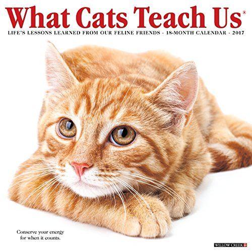 What Cats Teach Us 2017 Wall Calendar