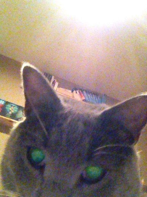Cat Selfie  http://searchingforafirefly.wordpress.com/2013/07/24/cat-selfie/