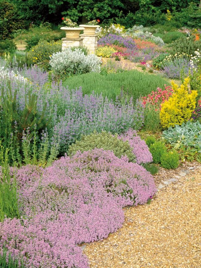 422 best images about garden appeal on pinterest for Low maintenance summer flowers