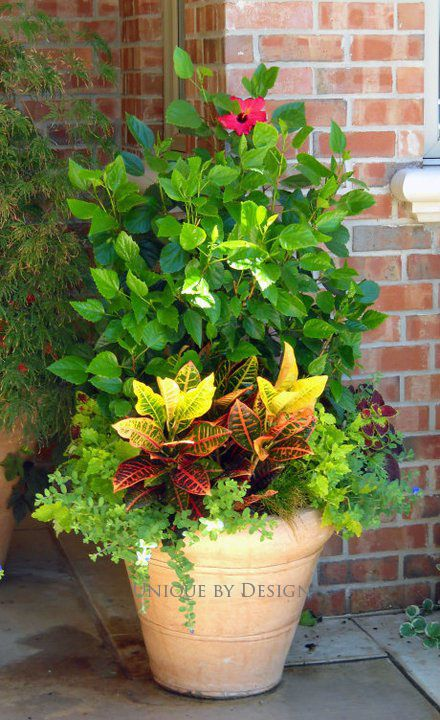 Best 25 fall potted plants ideas on pinterest fall container plants autumn planter ideas and - Potted autumn flowers ...
