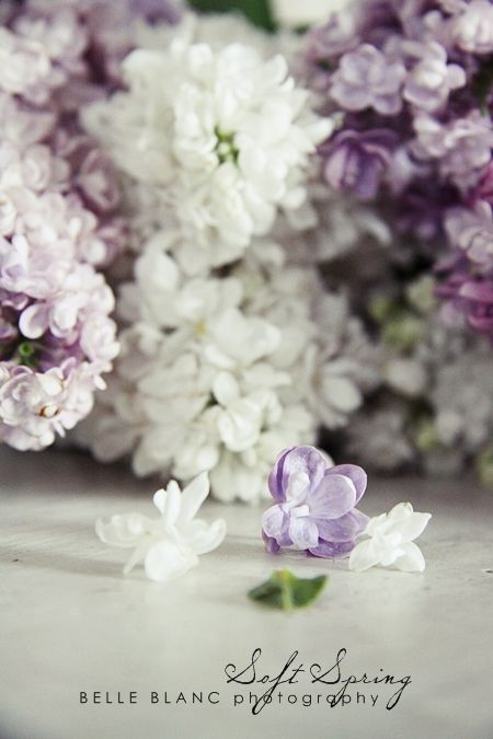 my favorite flowers.  This is a beautiful picture.