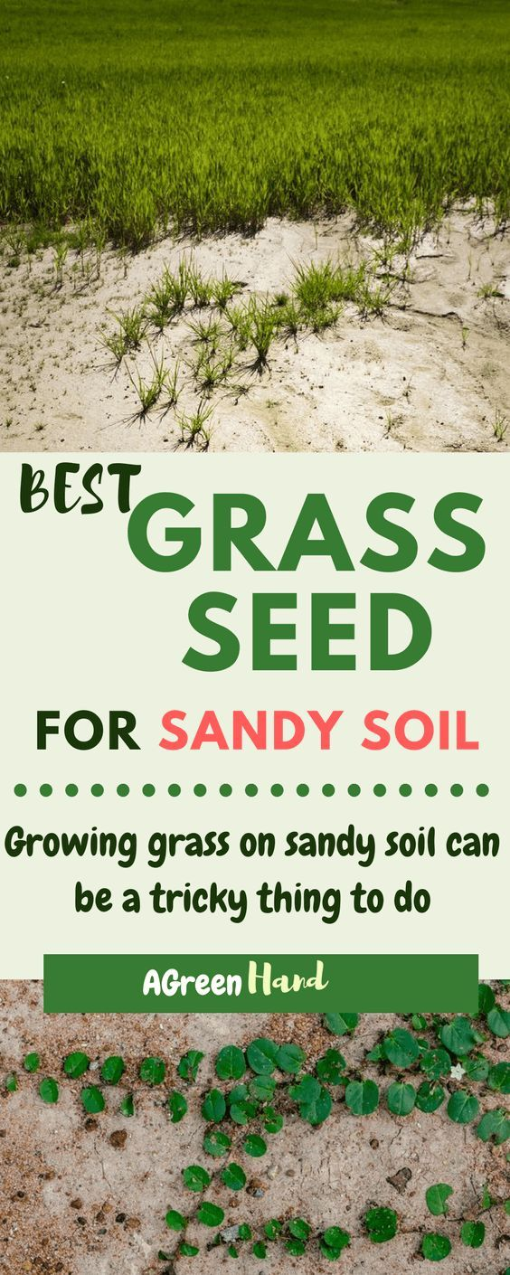 Got Sandy Soil Know The Best Grass Seeds For Sandy Soil Best Grass Seed Sandy Soil Growing Grass