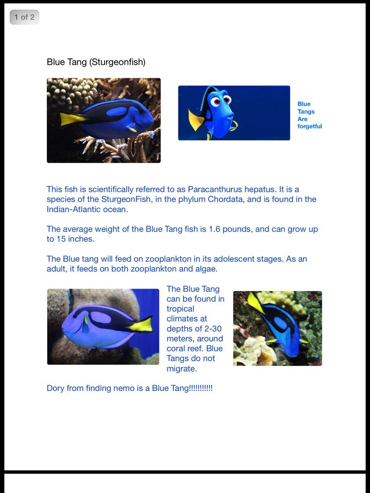 Best Marine Biology Block  Images On   Marine