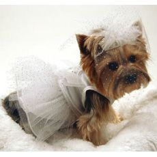 so cute! i should dress my dogs up in this outfit and see how they like it ! :)