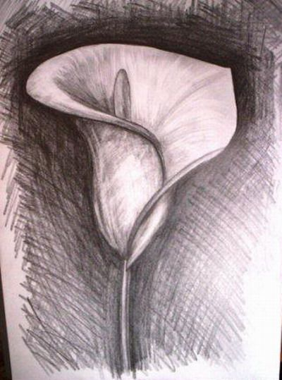 Flower drawing by pencil - keeping this on hand in case I want to draw a lily