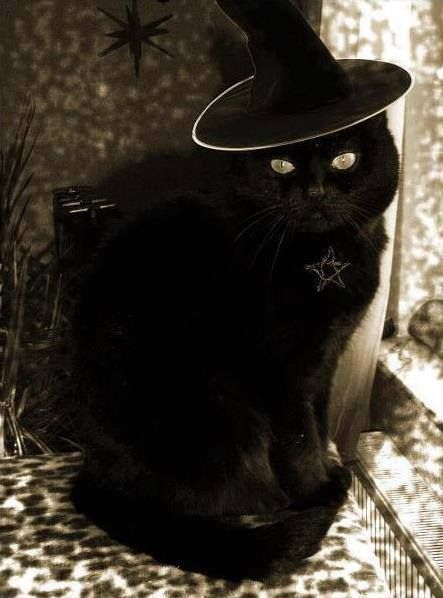 Black cats are awesome. They are associated with witches but they are not evil neither are black cats.