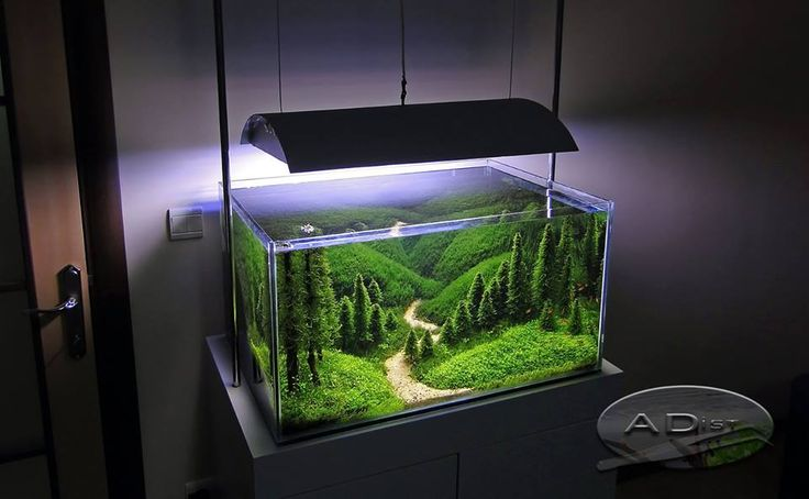 150 Best Images About Aquariums And Aquascaping On