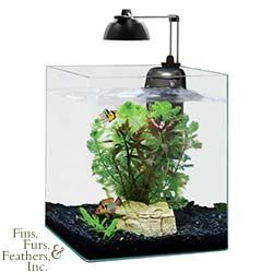 4, 6, or 9 gallon tanks, Eheim Aquastyle Nano Cubes, aprox $120-$160: good betta tanks. Your betta will display beautiful swimming, flaring and exploring behavior in these larger tanks that you may not see when they are kept in smaller habitats.