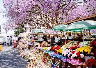 Flower market in Harare, Zimbabwe, Africa. Travel to Zimbabwe with INSPIRATION ZIMBABWE, your boutique Destination Management Company (DMC) for all inbound travel to Zimbabwe, Africa. INSPIRATION ZIMBABWE is a member of GONDWANA DMCs, a network of boutique DMCs across Africa and beyond. www.gondwana-dmcs.net