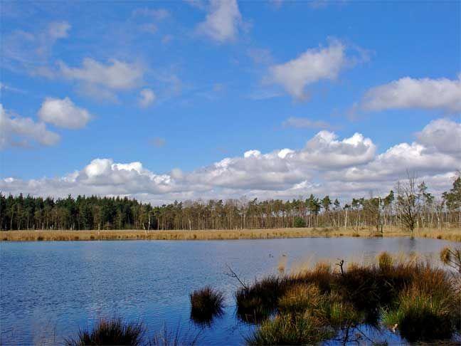 Wandelroute - Boswachterij Borger - Staatsbosbeheer wandeling 13