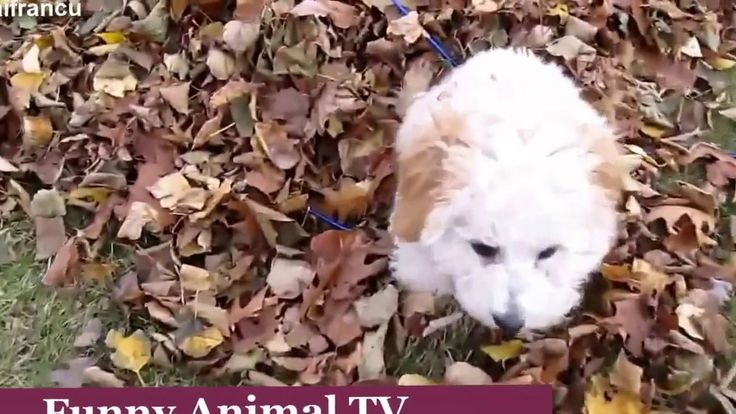 Funny Puppy Videos Compilation