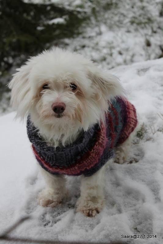 Nuppi-koiran villapaita A pullover for Nuppi (the dog) ;)