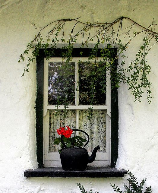 // Irish Cottage - small wooden windows, black potted kettle with stricking red geranium, whitewash walls