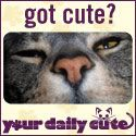Sad Cat Diary - thanks Dorian and Your Daily Cute!  (you gotta love the cute!)