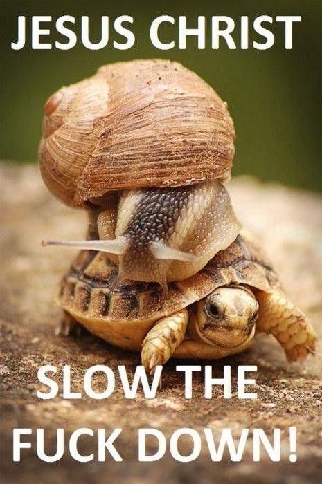 slow down!: Slowdown, Slow Down, Animals, Funny Stuff, Turtles, Funnies, Funny Animal