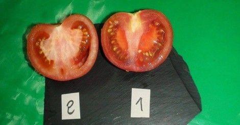 ¿Cómo+distinguir+un+tomate+ecológico+de+uno+transgénico?