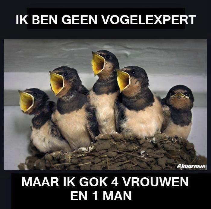 vogelexpert