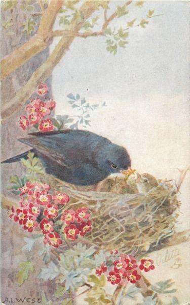 blackbird feeding three chicks: