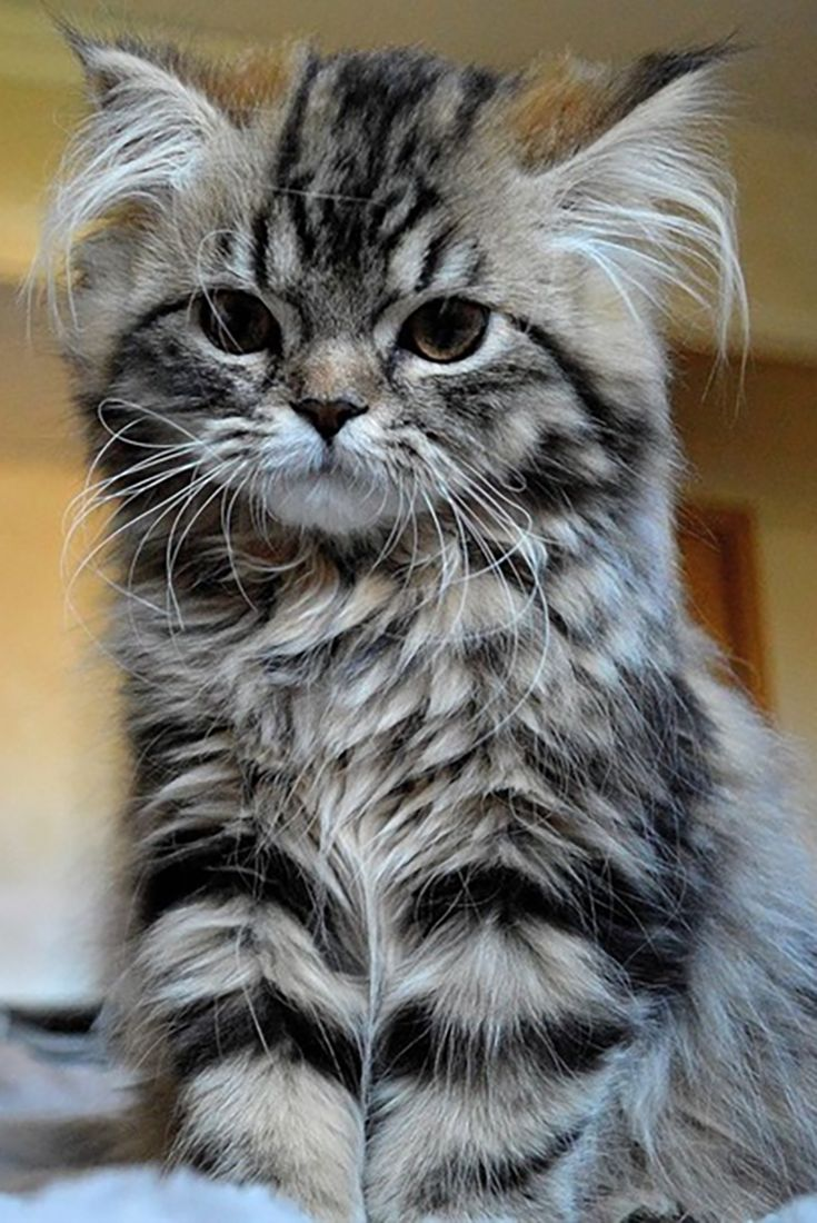 20 Pictures Of Cute Cats That Will Melt Your Heart