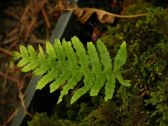 314 Best Oregon Native Plants Images On Pinterest Cabin