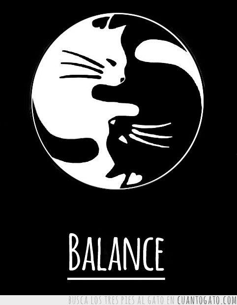 сталкиваешься коты инь янь арт кошек для фотосессии