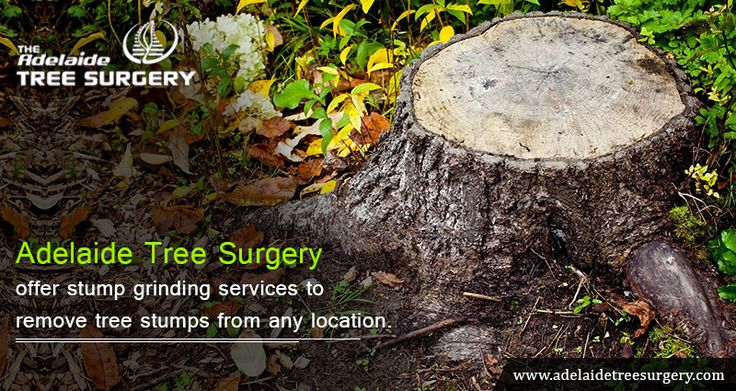 Stump Removal Adelaide - Are you looking for stump grinding and removal service in Adelaide, SA? Adelaide Tree Surgery is leading Arboricultural company offer best service at affordable price. For more info visit now!