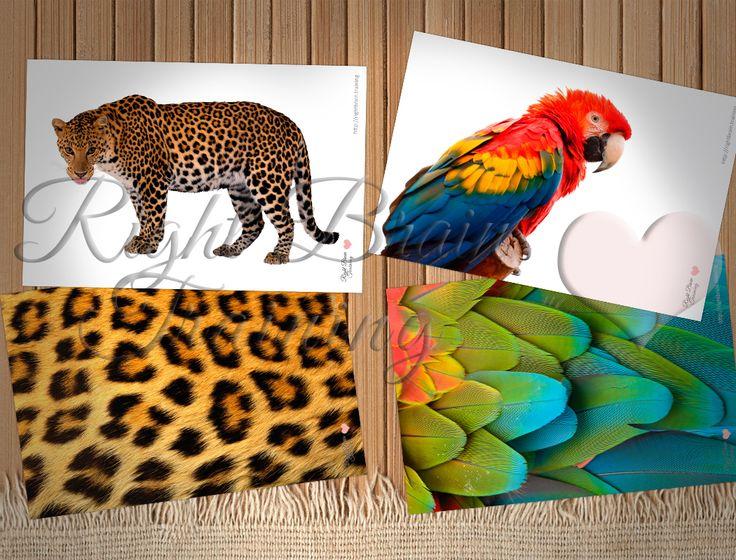 Текстуры животных - Занятия для развития детей RightBrain.Training
