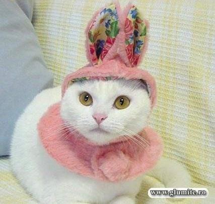 Poze Animale-Pisica de carnaval Bancuri glume poze - Glumite.ro