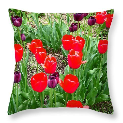 "Red And Purple Tulips Throw Pillow for Sale by Aimee L Maher Photography and Art Visit ALMGallerydotcom. Our throw pillows are made from 100% spun polyester poplin fabric and add a stylish statement to any room. Pillows are available in sizes from 14""x14"" up to 26""x26"". Each pillow is printed on both sides (same image) and includes a concealed zipper and removable insert (if selected) for easy cleaning. Ships within 2-3 business days"