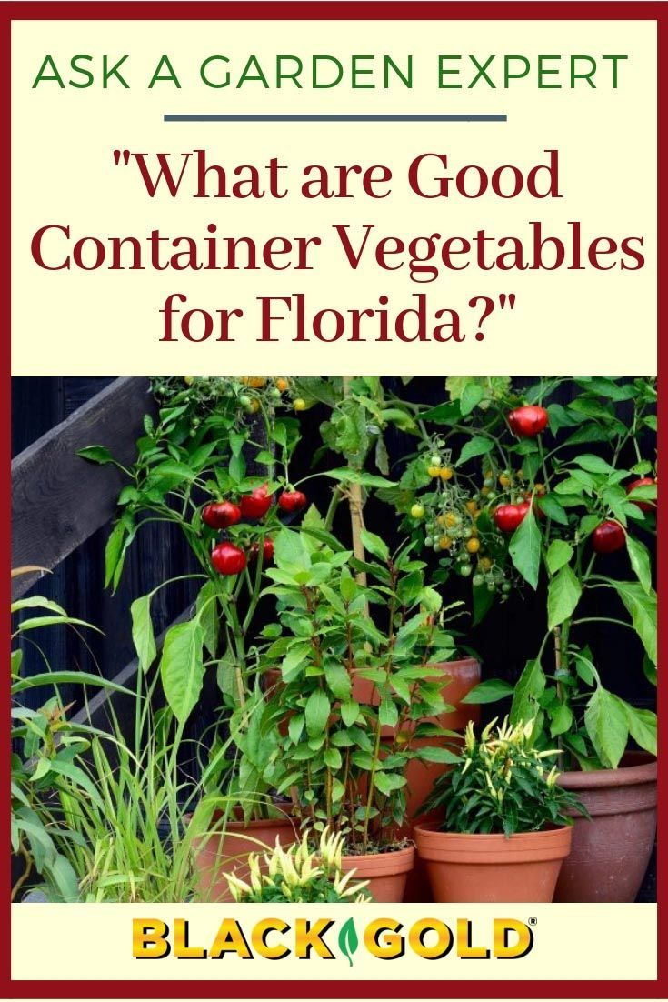 What Are Good Container Vegetables For Florida In 2020 Florida Gardening Container Vegetables Fall Garden Vegetables