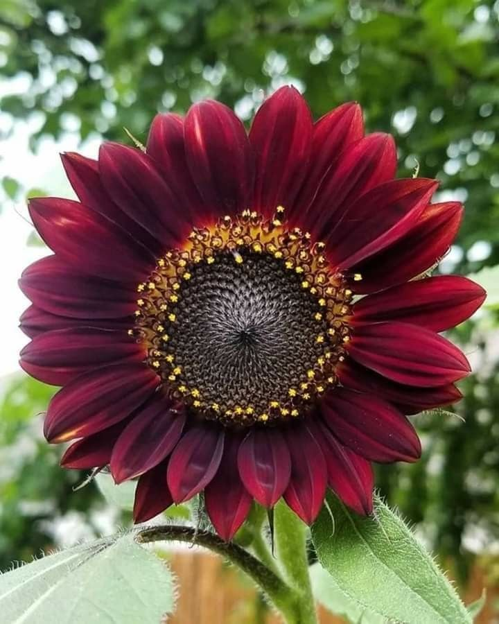 Pin De Maria Cristina Henao En Variety Of Flowers Flores