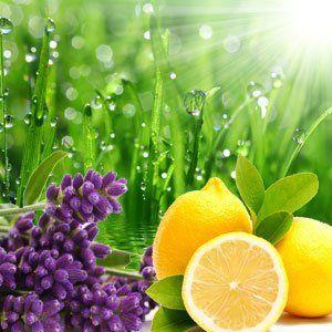4. Air Freshener