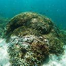 La NASA y científicos analizarán bancos de coral desde el aire - Informador.com.mx  Informador.com.mx La NASA y científicos analizarán bancos de coral desde el aire Informador.com.mx Desean comprender mejor cómo son afectados por el calentamiento global. HAWAII, ESTADOS UNIDOS (10/JUN/2016).- Los arrecifes de coral casi siempre han sido estudiados de cerca por los científicos en…