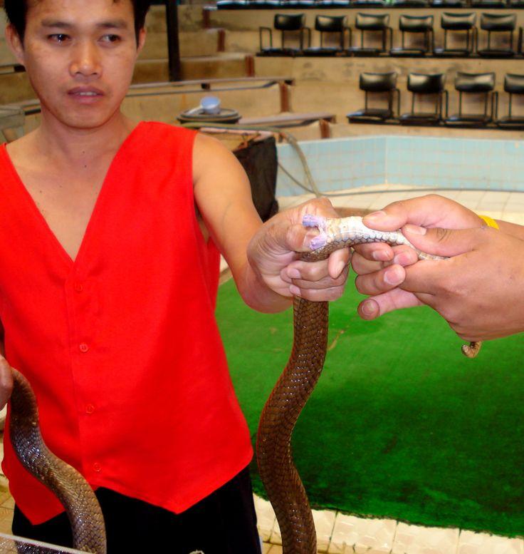 Теперь понятно, почему китайцы едят змей, червей и муравьев! [В традиционной китайской медицине больше всего поражают ингредиенты: сушеные морские коньки, гекконы, змеи, черви… В аптечной Поднебесной вы даже найдете освежеванных оленей и сов. И если такую экзотику вполне можно ожидать от последователей народной медицины, то для серьезных ученых в белых халатах подобное, казалось бы, неуместно. Однако, альтернативные для западного мира лекарства — особая составляющая китайской культуры. ]