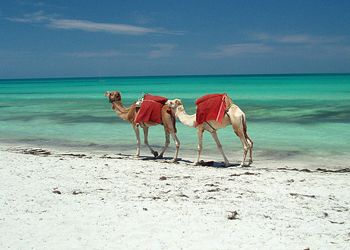 Tunisia: I've put my feet in the Mediterranean Sea and rode a camel across the Sahara. Great experience.