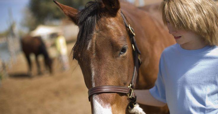 """Andar de cavalo usando cabresto em vez de rédeas. Andar de cavalo usando um cabresto em vez de rédeas é uma prática conhecida como """"sem focinheira"""". Há diferentes tipos de rédeas sem focinheira e é fácil fazer um cabresto. Para fazer um, anexe a corda de ligação à parte mais baixa do queixo ou anexe as rédeas em cada lado da boca do cavalo. Esse tipo de rédea proporciona ao montador o controle da ..."""