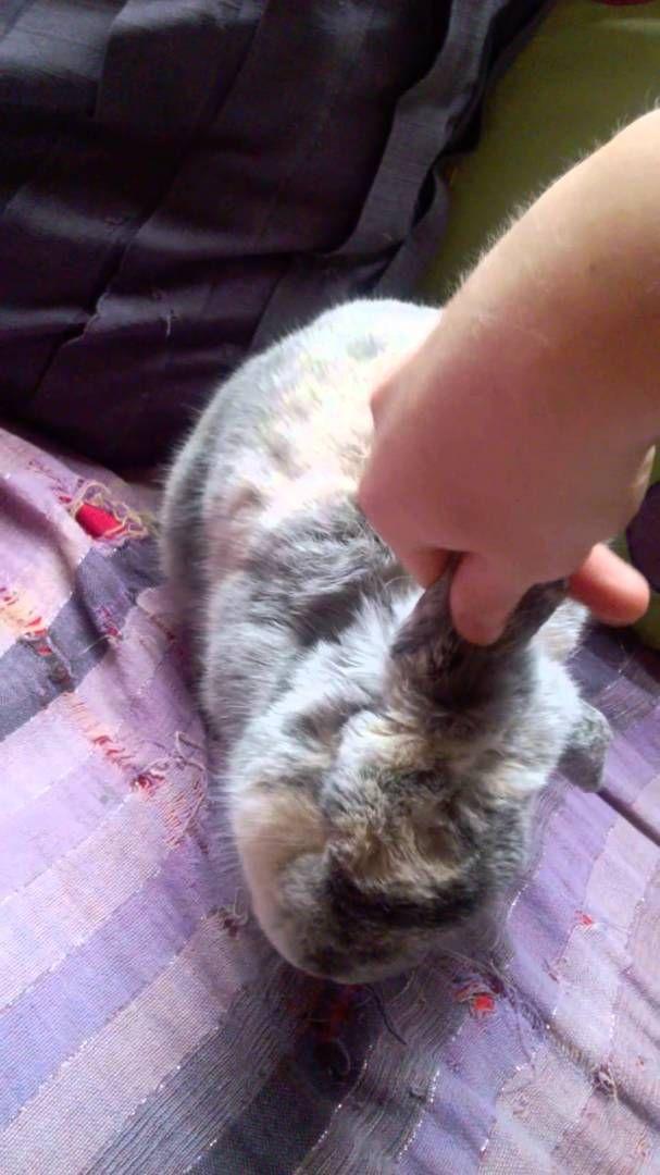 Massage du lapin 5 : les oreilles - Vidéo Association Marguerite & Cie