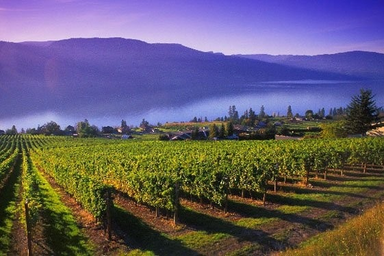 "The Okanagan Valley is wine country, British Columbia's ""Napa of the North."" At Nk'Mip Cellars, Canada's first Aboriginal-owned-and-operated winery, ripe fruit orchards and grapevines nudge up to low-growing sagebrush in a rare tract of Canadian pocket desert overlooking Osoyoos Lake."