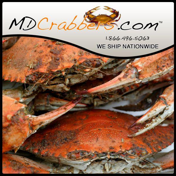 recipe: order live blue crabs online [29]
