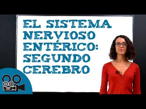 El sistema nervioso entérico: segundo cerebro