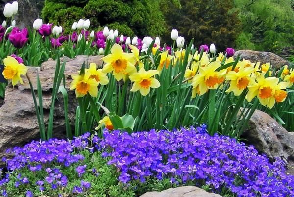 """Pretty spring flowers courtesy of """"My Rose Valley"""""""